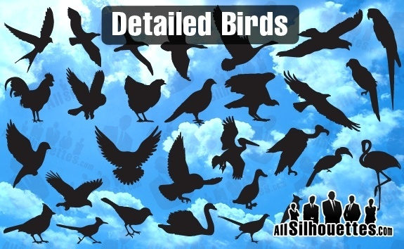 Detailed Vector Birds