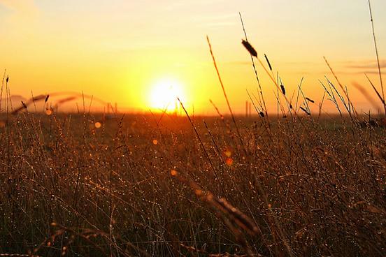 dew at sunrise