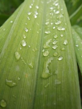 dew letter nature