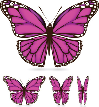 different color butterfly sample vector