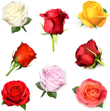 different colored roses vectors