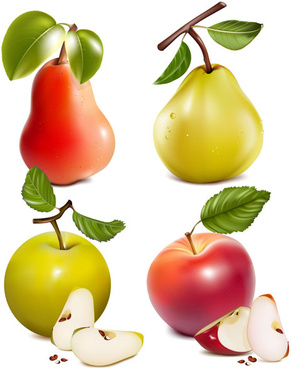 different fruit and green leaves vector