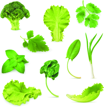 different green vegetables vector