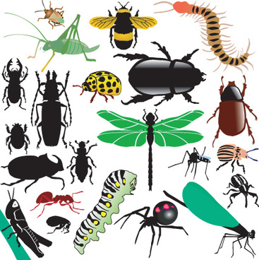 different insects design vector