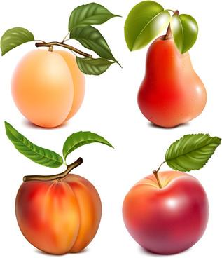 different juicy fruit vectors