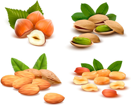 different nuts vector design