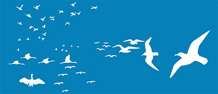 different seagull design vector
