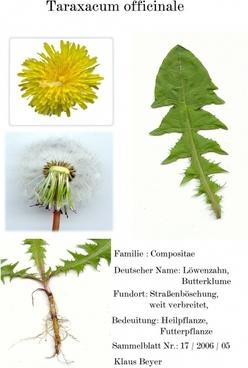 digitized herbarblatt medicinal plant scanners