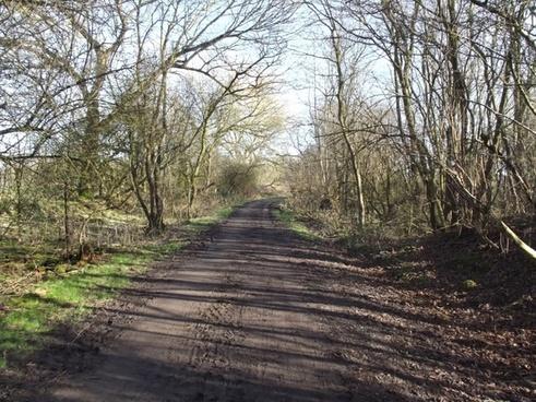 dirt path nature trail