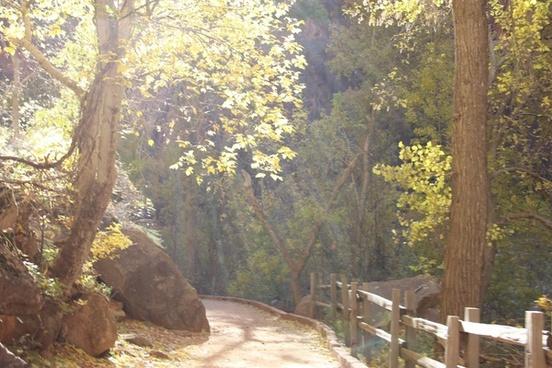 dirt path through trees