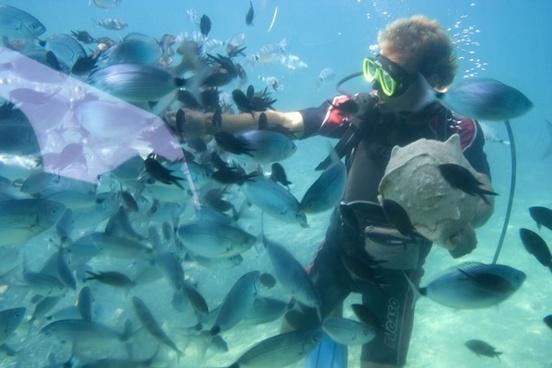 diver feeding fish