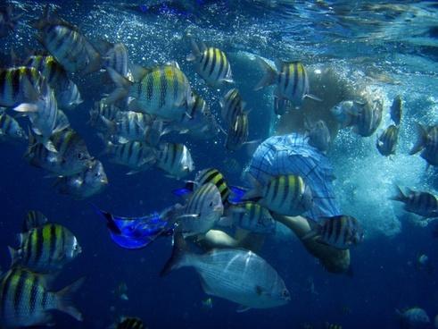 diving underwater fish