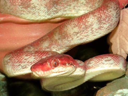 do you speak snake