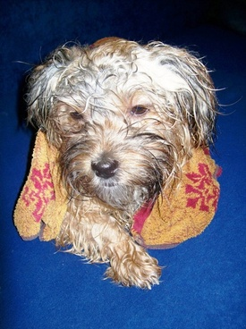 dog after bath