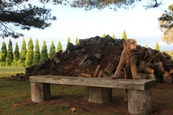 dog and logs