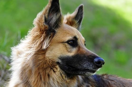 dog animal bitch