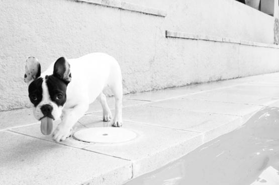 dog animals pets