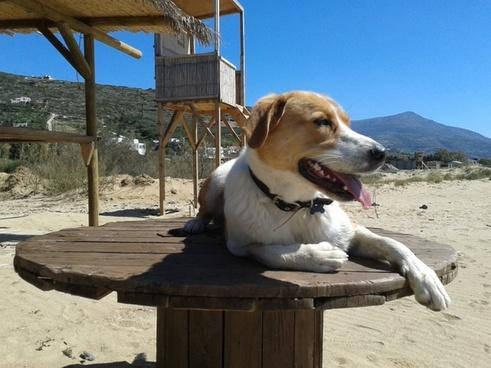 dog beach animal