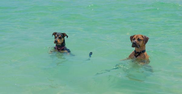 dog beach fun