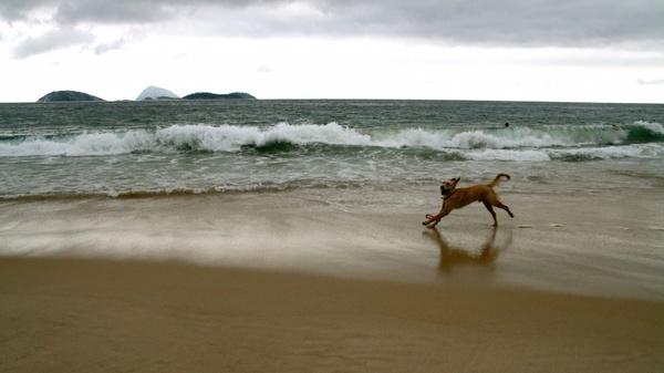 dog beach water