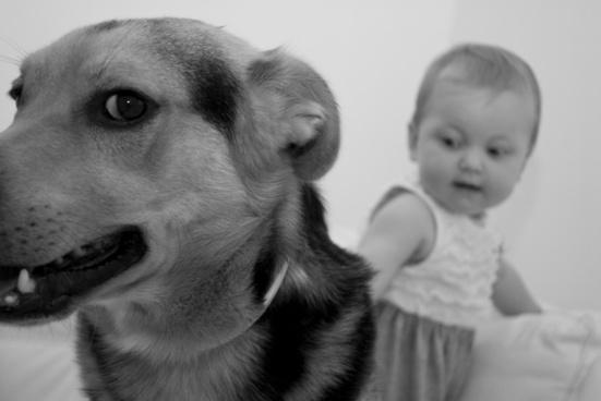 dog bimbo animal