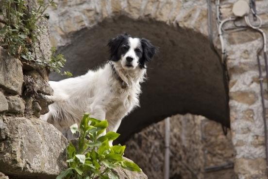 dog black white