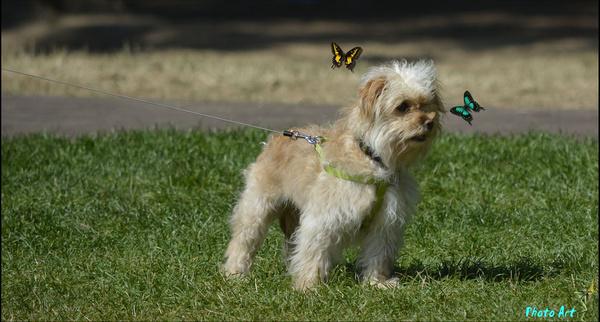 dog butterflies