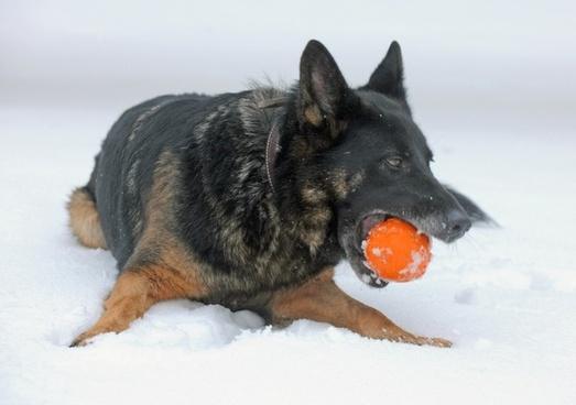 dog canine winter