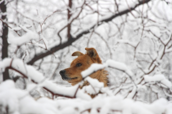 cute dog in cold snowy winter