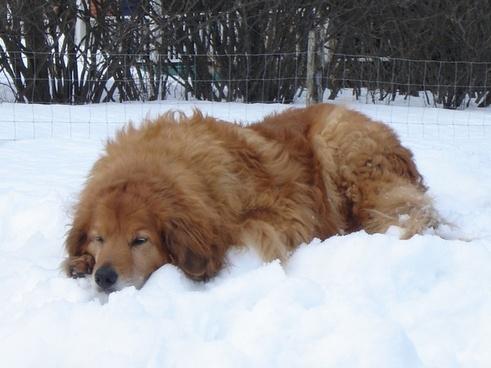 dog crusader canine