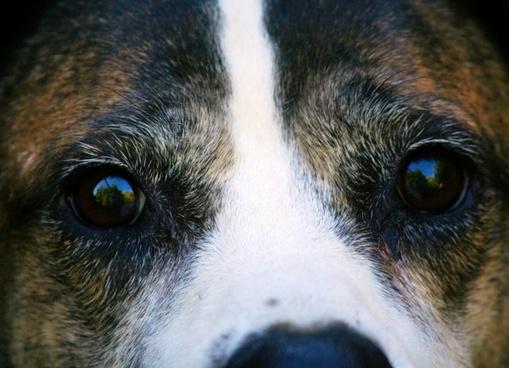 dog face canine eyes
