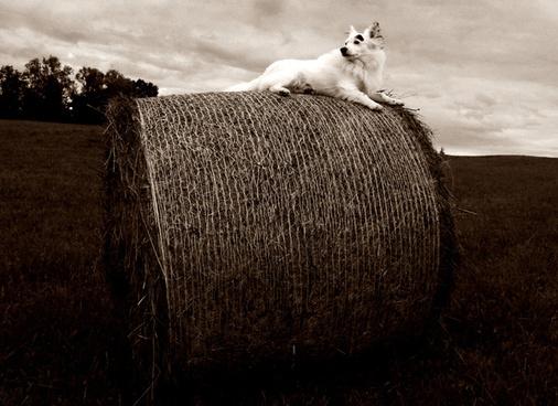 dog farmer