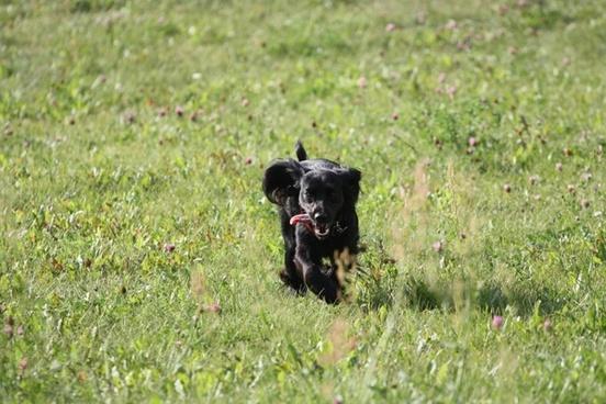 dog gear joy
