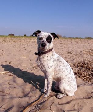dog hybrid male