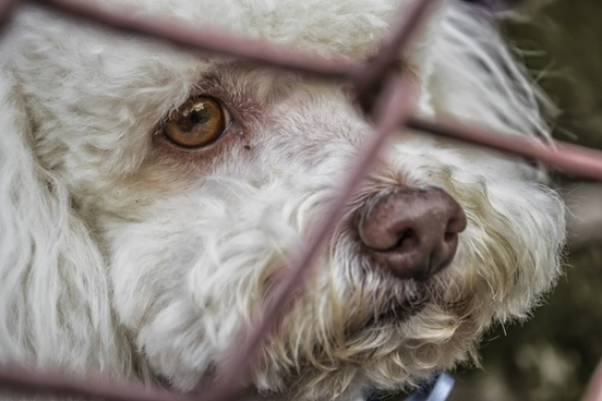 dog locked up race