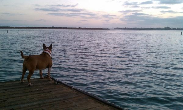 dog peer