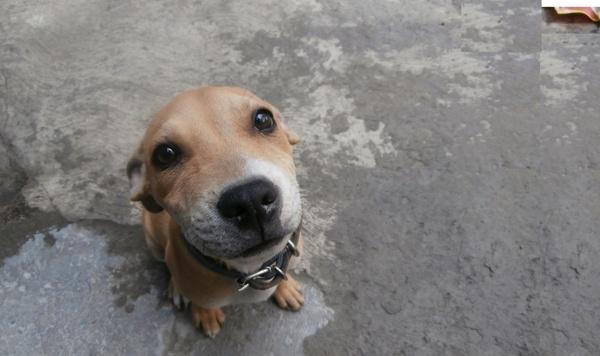 Beautiful Pet Animals Free Stock Photos Download 9 327 Free Stock