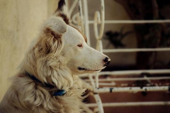 dog profile dog animals