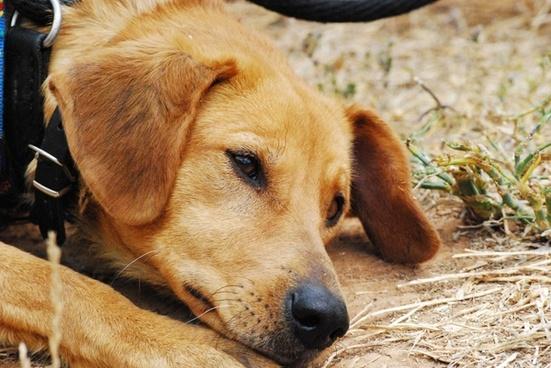 dog sad exposed
