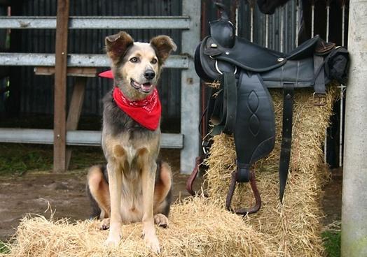 dog saddle western