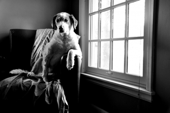 dog stoic black and white