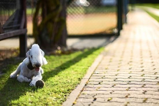 dog summer shadow