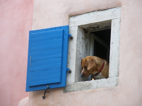 dog window funny