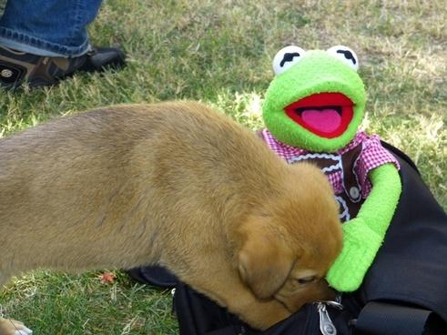 dog young playful