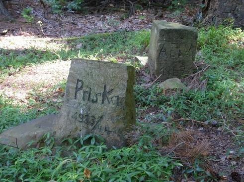 dogs pets grave