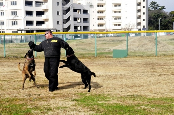 dogs training attacking