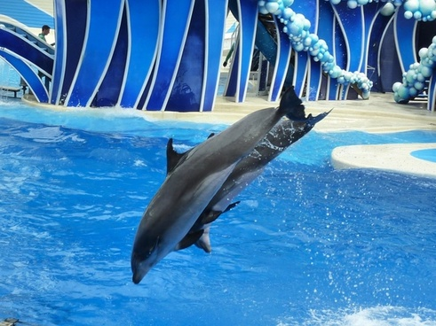 dolphin animal performance