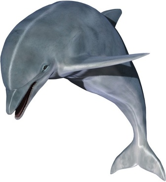 dolphin hd pictures