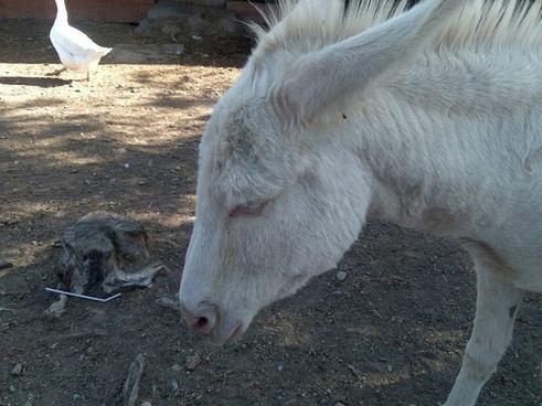 donkey animal