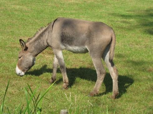donkey animal farm